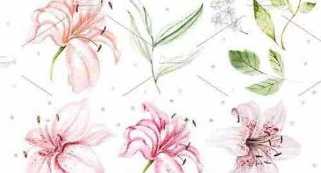 Hand Drawn watercolor flowers lily 2 - 5016942